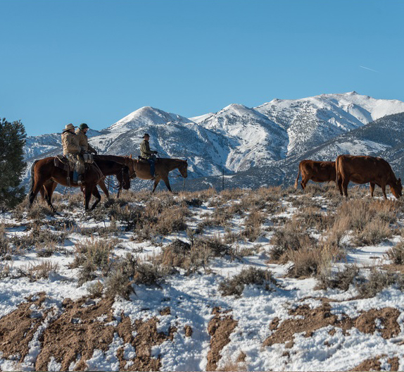 hunewill ranch cattle drive